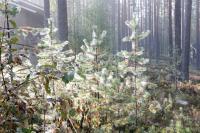 Осенняя родео-сессия в Финляндии(Лиекса). Кемпинг Нейтикоски. Утро.