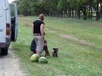 Местные полевые собачки.