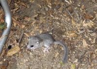 Осенний Кавказ 2013, учебно-тренировочный выезд. Вечер. Иногда заходила интересная мышь.