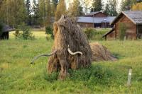 Родео-сборы в сентябре 2012, Финляндия(Лиекса). Мамонт ждет холодов.