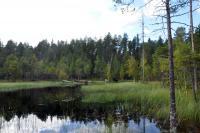 Родео-сборы в Финляндии(Лиекса)2012, август. Уже чувствуется дыхание осени.