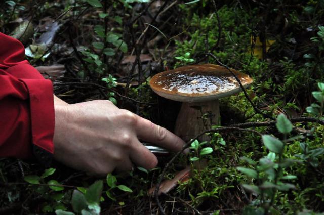 Ну и конечно грибочки.
